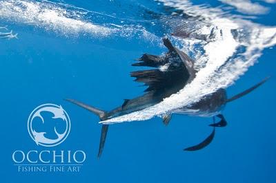 Occhio Fine Art Photography 2