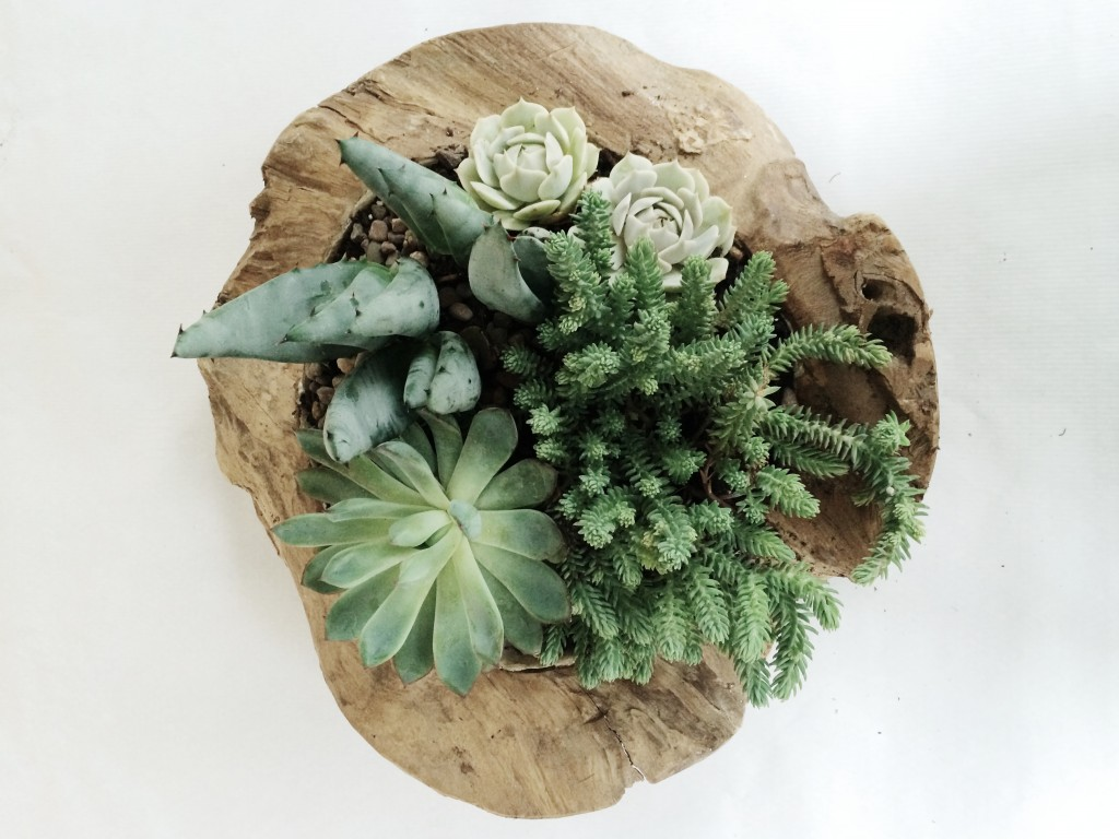How to Create a Succulent Container Garden Arrow+Sage/Design Lines Raleigh NC 13