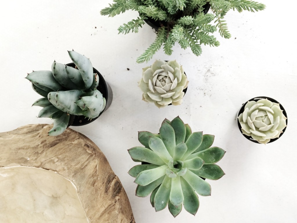 How to Create a Succulent Container Garden Arrow+Sage/Design Lines Raleigh NC 3